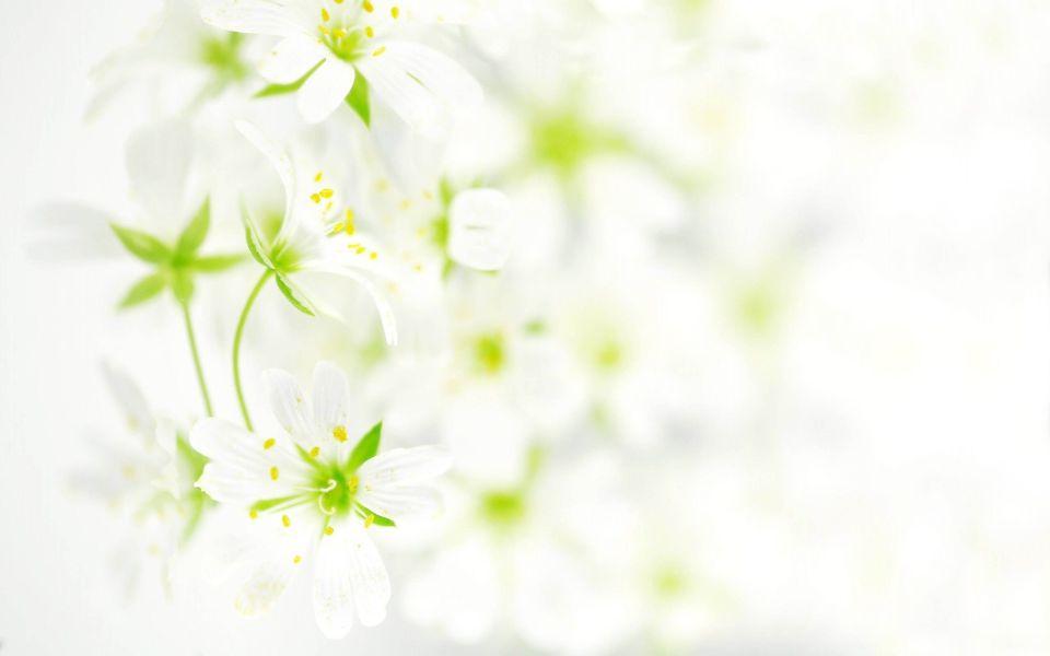 Cool White Background Hd Wallpapers Jpg Lovenmeee